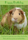 "Guinea Pig-Happy Birthday - ""Never Been This Old Before"" Theme"